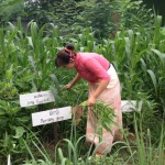 organic farm in csf thailand