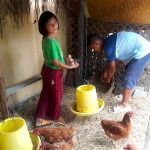 the children take care the chickens at csf chiang mai